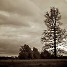 Old Hickory Tree by Ray4cam
