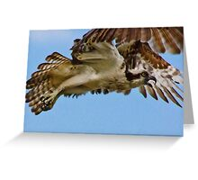 Protecting The Nest, Adult Osprey, Jordan Lake, NC Greeting Card