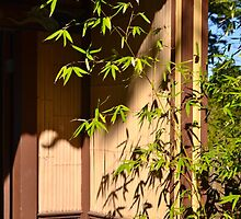 bamboo in a doorway by hitomimyhomie