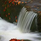 CASCADE,MIDDLE PRONG LITTLE RIVER by Chuck Wickham