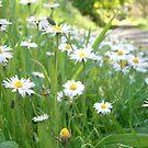 Wildflower Walk by Judi Rustage