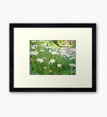 Wildflower Walk Framed Print
