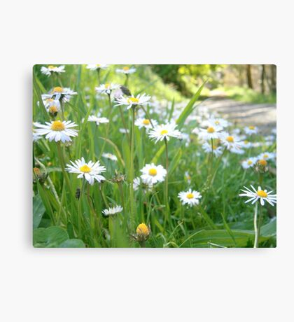 Wildflower Walk Canvas Print