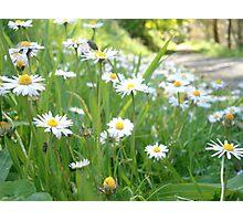 Wildflower Walk Photographic Print