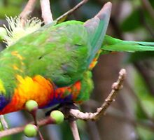 psycho lorikeet by Trish Threlfall