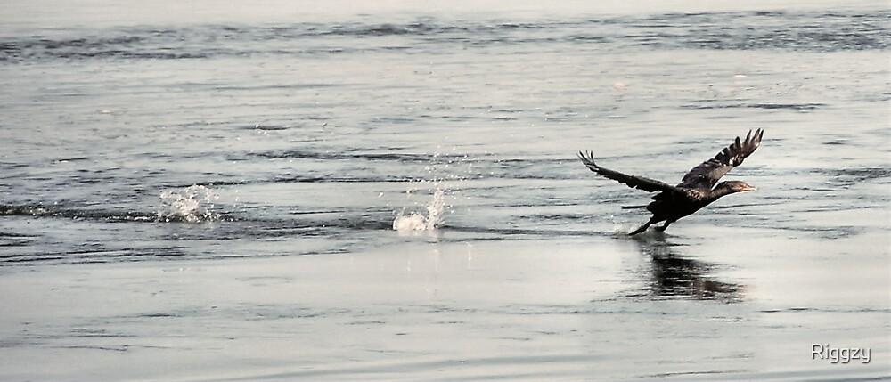 Crash Landing by ShutterUp Photographics