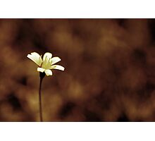 Little Macro Photographic Print