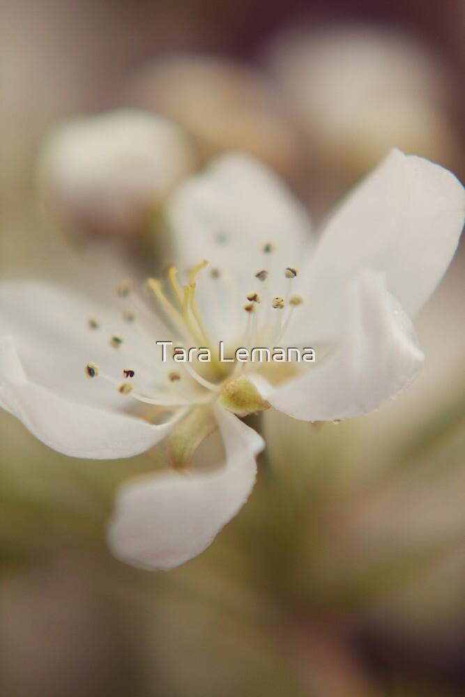 Blossomed by Tara Lemana