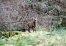 Bambi by Chris Goodwin