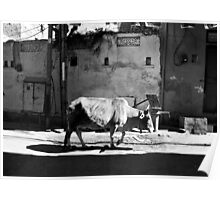 The Black and White Album - #34 Poster