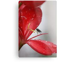 Beauty Spoiled Metal Print