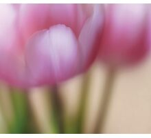 Tulip Impression Photographic Print