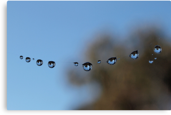 Dew Drops on Spider Web. by John Sharp