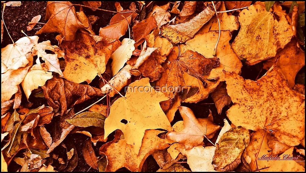 """"""" Autumn Leaves"""" by Malcolm Chant"""