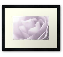 White Rose Framed Print