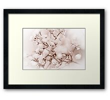 Grass Flower Framed Print