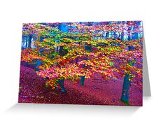 Forest, color leaves Greeting Card