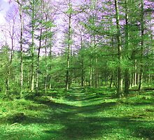forest - Lets walk this way by Go van Kampen