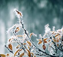 28.10.2012: Frost, Branches, Colours by Petri Volanen