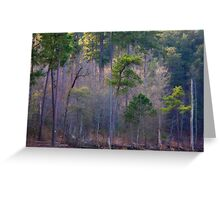 Trees And Light, Jordan Lake, NC Greeting Card