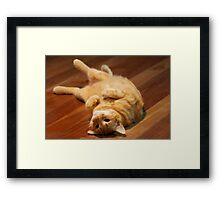 Ginger Cat Playing to Camera Framed Print
