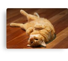 Ginger Cat Playing to Camera Canvas Print