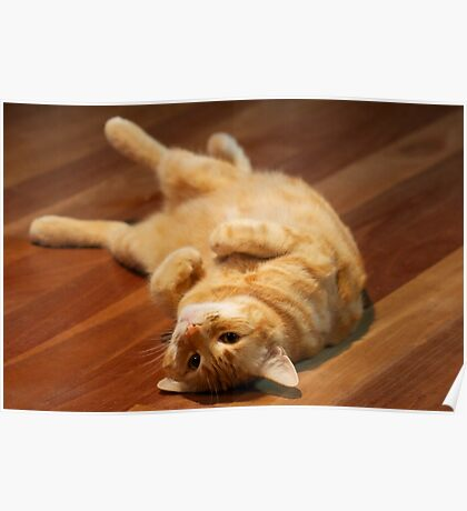 Ginger Cat Playing to Camera Poster
