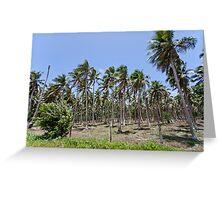 Palm trees, Vanuatu, South Pacific Ocean Greeting Card