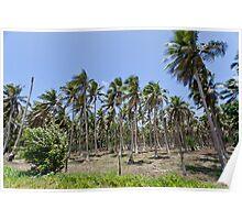 Palm trees, Vanuatu, South Pacific Ocean Poster