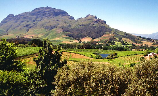 Stellanbosch, South Africa by Carole-Anne