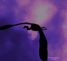 Flying by DreamCatcher/ Kyrah Barbette L Hale