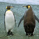 Conversation: King Penguins, Macquarie Island by Carole-Anne