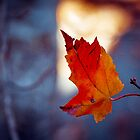 Last leaf on the branch by KSKphotography