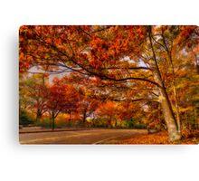Fall Road,Chestnut Hill, Massachusetts Canvas Print