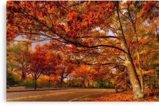 Fall Road,Chestnut Hill, Massachusetts by LudaNayvelt