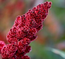 Raging Red Sumac by Rosemary Sobiera