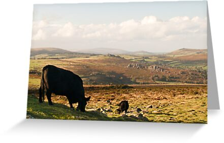 The view from Haytor Rocks by redown