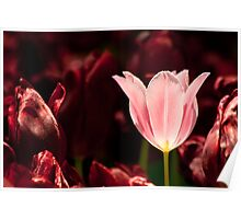 Glowing Tulip Poster