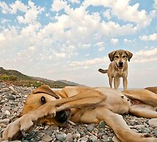 Playful Dogs On The Beach by Kuzeytac
