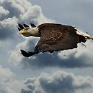 Cruisin' Altitude by Lori Deiter