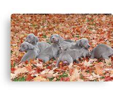 Weimaraner Puppies Canvas Print