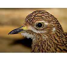 Thick Knee Photographic Print
