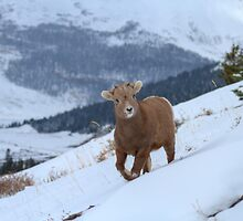 Big Ball of Warm Fur by JamesA1