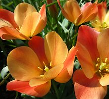 Orange botanical tulips by flips99