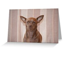 Pickle the chihuahua Greeting Card