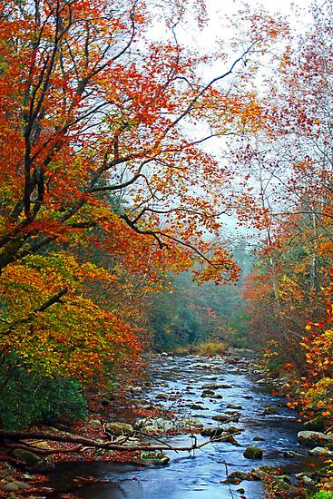 LITTLE RIVER,AUTUMN 2012 by Chuck Wickham