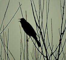 Songbird by jaeepathak