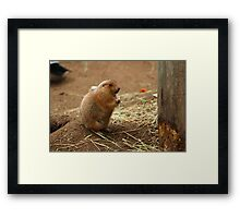 Sorry, I Can't Make Gold from Straw Framed Print