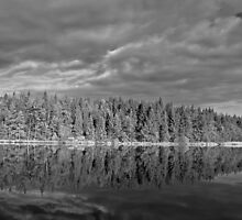 The forest lake by Mark Williams