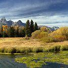 Golden Marsh Grasses, Teton Panorama by A.M. Ruttle